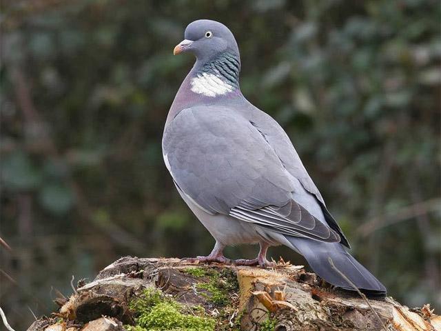 Летите голуби  Песни в исполнении детского хора  Чудесенка